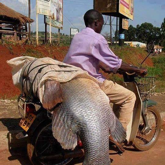 דג גדול על אופנוע