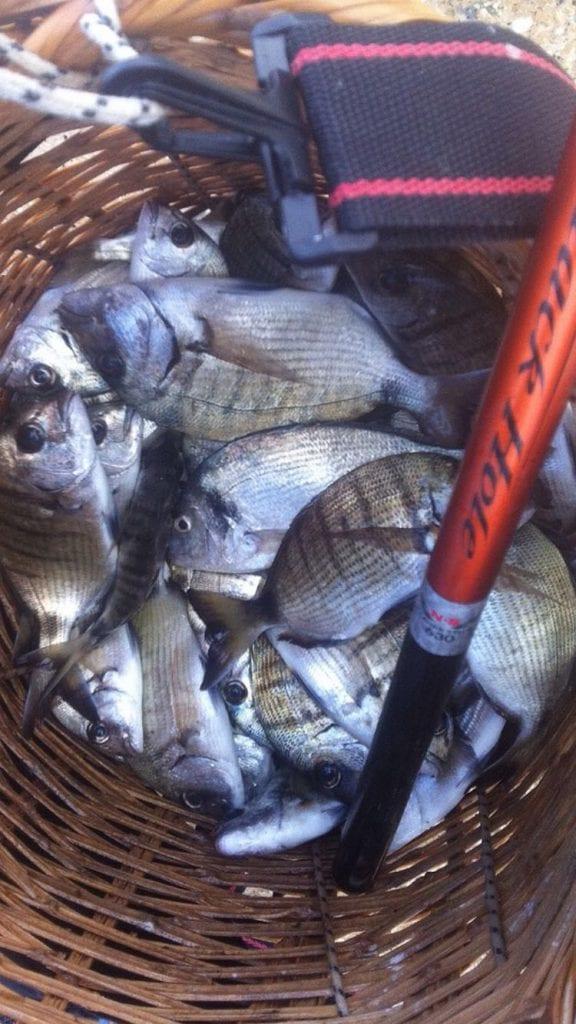 סל מלא דגים