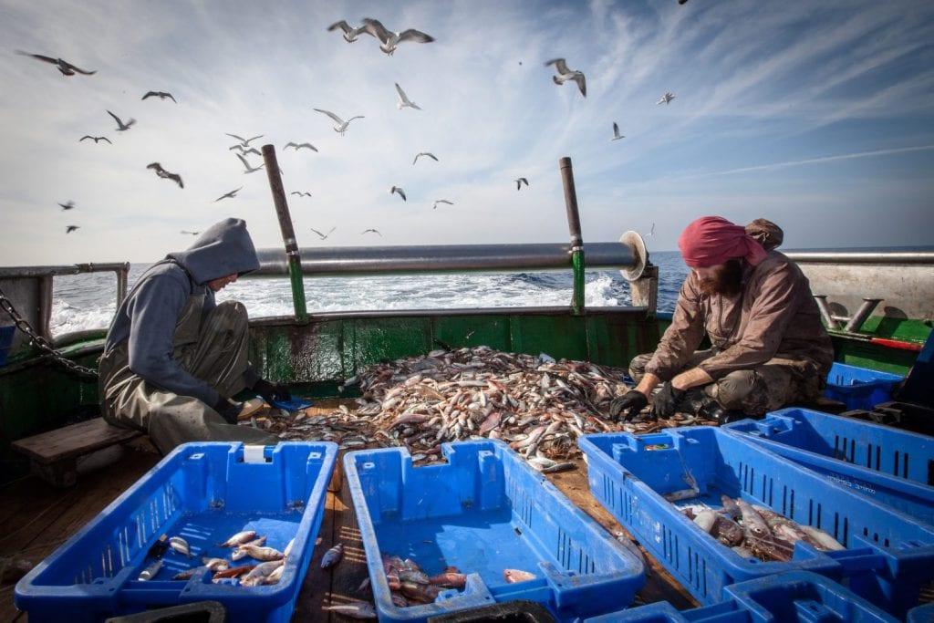 דיג במים עמוקים עם ספינת המכמורת של הדיג הותיק אורי שרון. מבט על קו החוף של תל אביב ומלונות תל אביב , מהים. ים ספינה דייגים דייג דגים שמים ציפורים שחפים
