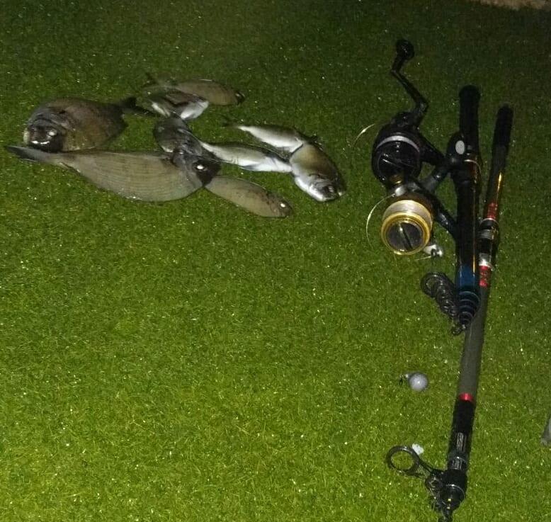 גדעון דיג סרגוסים