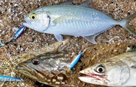 """Shraga Milon: """"דיג בז'רז'ור אולטרה לייט עם 7 דגים מ 6 סוגים שונים ? ו3 בריחות"""""""