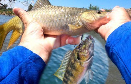 "Shraga Milon: ""טיול דיג 🎣 במתוקים בצפון חלק 2 מתוך 3 🐟"""