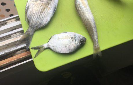 """בנימין: """"תפיסת דגים בחוף ושוחררו"""""""