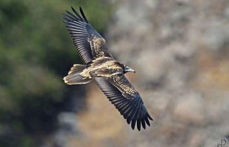 בקשה לעזרת ציבור הדייגים ושייטים בים במציאת הרחם והמשדר של העוף