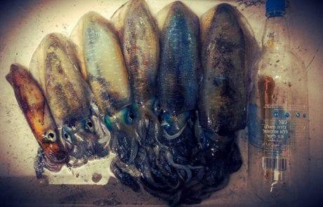 פירות טריים מהעונה והדרכה לעבודה נכונה לדיג קלמרי