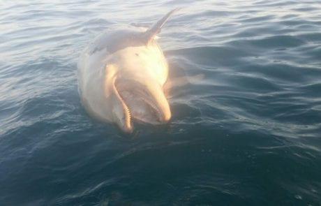 יום מבאס ועצוב גם לדולפינים היום