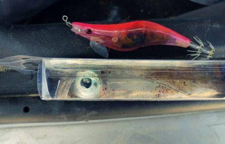 סהר: הכנות אחרונות לקראת דג האינטיאס!