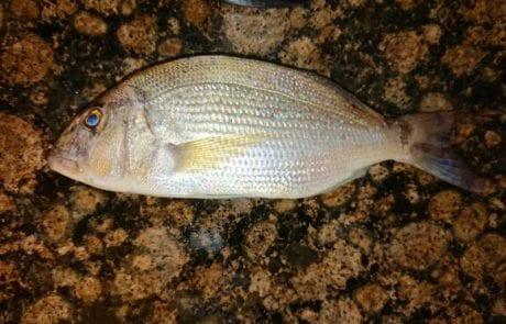 """דוד בהודנה: """"עזרה בזיהוי הדג. אכיל?"""""""