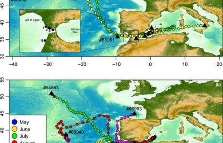 טונות בים התיכון: למה זה מעניין אותנו ומה ניתן להשיג מתיוג לווייני של טונה כחולת הסנפיר?