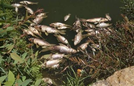 מוטי מלול: ריח של גופות באוויר בפארק הירקון שבע תחנות