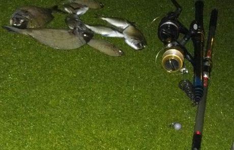 גדעון: דיג סרגוסים איכותי – 4 קילו במצטבר