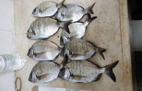 מרדכי: אחלה דיג בליל שישי סרגוסים בים סוער