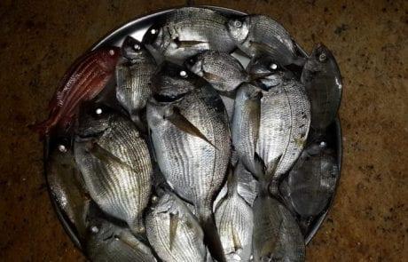 בלאל מריסאת: עוד לילה מהנה בדיג חוף עם בוס
