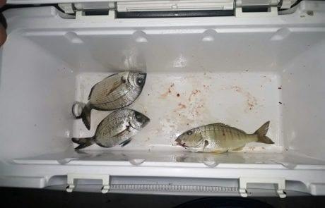 קובי חדד: דיג נחמד במרינה באשקלון