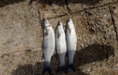 משה: קצת דיג לא יזיק אחרי הרבה זמן