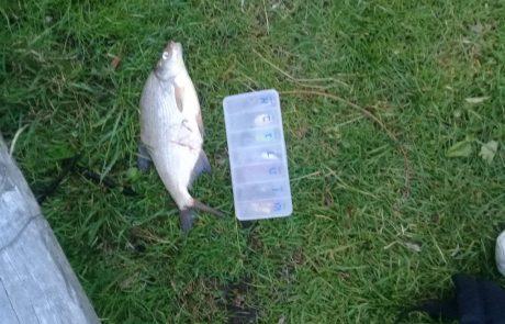 סהר פולק: מלא אכילות אבל שום תפיסה עד שבא המפלצת אחרי כמה תמונות חזר למים