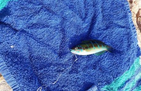 """נועם כהן: """"דג טוקי קטן באיביזה"""" – שוחרר"""