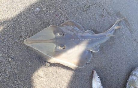 """ראמי יאסין: """"שעתיים ברצף דגים טלווזיות .. התחלנו לקפל ציוד ואז בוום  .החתול בא לביקור … ולבסוף שוחרר חזרה לים"""""""