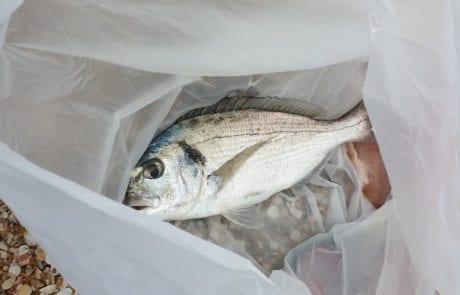 """מאהר דייג חדש: """" איך מכינים בצק לדיג?"""""""