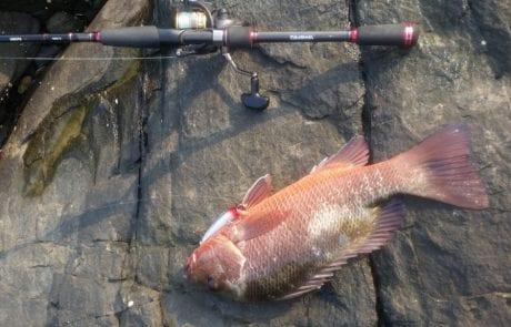 """אלון י.: """"אחרי שעות של ז'רז'ור בא דג אחד וקורע אותי בסלע, הפעם באתי עם קלאץ' נעול.."""""""