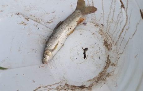 "Yossi.z: ""אחרי כמה נסיונות כושלים לתפוס חזרה קרפיון שחור שקרע את החוט עולים כל מיני דגים"""