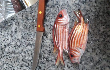 """דניאל מלייב: """"ליד מרינה הרצליה , שקט …להקות של ברקן אדום (מיוחד ) דג יפה ועוקץ כמו סכין"""""""