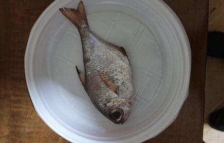 """אמיר: """"איזה דג זה ?"""""""