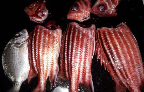 """בועז הדייג: """"פעם ראשונה שאני דג דג כזה"""""""