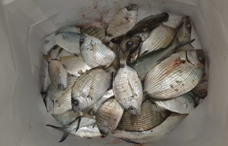 """בועז הדייג: """"לילה של הרבה דגים"""""""