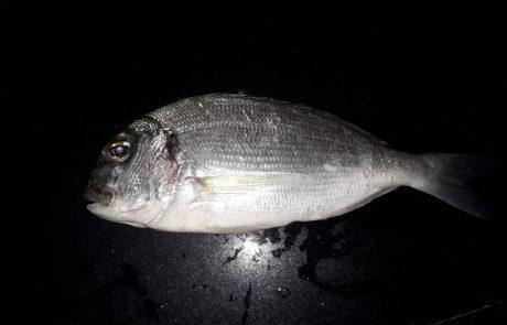 """בועז הדייג: """"איך קוראים לדג הזה?"""""""