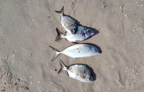 """פאוליקו: """"עם שמש נעימה וים מדהים יצאתי לדוג בחוף הדייגים באולגה.יצאו להם כמה דגים שבת שלום לכולם"""""""