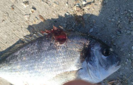 """עופר טויזר: """"לאחר המון התלבטויות הלכתי לדוג דגים באשדוד ,בדג הראשון כבר הבנתי שזו טעות הדגים חולים לגמרי ,ממליץ לא להתקרב!!!!"""""""