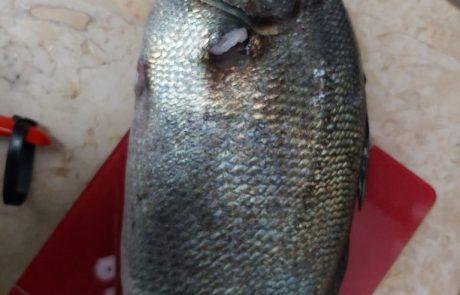 """שלום רמתי: """"איזה סוג דג זה"""""""