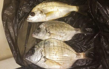 """אבי א: """"שבוע טוב ומבורך דייגים. מישהו יכול לעזור בזיהוי הדג העליון?"""""""