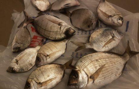 """איציק ברדה: """"הדגים הקטנים בתמונה זה אלו שבלעו את הקרס"""""""