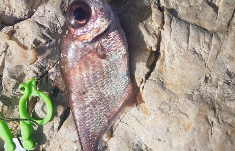 """אבירם פרץ: """"עזרה בזיהוי הדג """""""