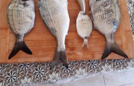 """בנימין קרויטורו: """"5 דגים אלו נתפסו לפני הסגר והובאו לידיעתכם היום.."""""""