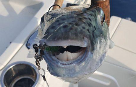 """shraga milon: """"יציאת דיג מהנה בסירה 🎣🚤"""""""