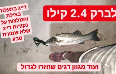 לברק ענק 2.4 קילו בתעלות באילת ? |איפה אפשר לדוג באילת ❓ועוד מגוון דגים ??