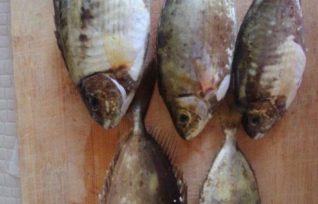 """בנימין קרויטורו: """"יום שישי בבוקר חוף אולגה ירדתי לחוף בהרגשה טובה שברור עולם יתן לי כמה דגים לשבת ..והדגים היגיעו """""""