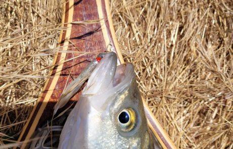 """אלון פסטרנק: """"מסע הדיג לצפון"""""""