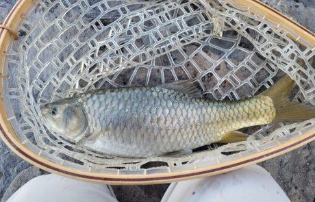 """אלון פסטרנק: """"מסע הדיג לצפון – חלק ב'"""""""