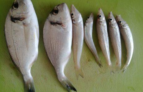 """בנימין קרויטורו: """"כמה דגים דגתי האושר של חיי"""""""