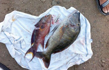 """""""פגיעה רצינית בטבע"""": קנס כבד לדייגים בשמורת האלמוגים באילת (וואלה)"""