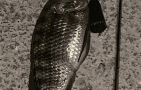 """בן אלקיים: """"עזרה בזיהוי דגים – שוחררו"""""""
