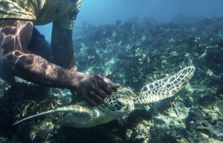הדייגים באי בפיג'י הפכו למגיני הצבים הנכחדים (הארץ)