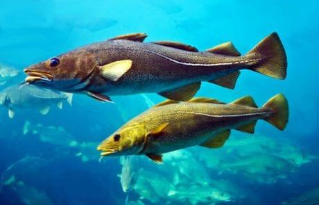 האם אכילת דגים גורמת להפרעות קשב וריכוז? (nrg)