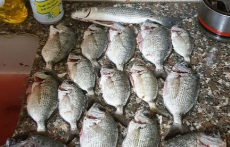 מואמין: ים נמוך מאוד שקשה לדוג נתפסו סרגוסים בשעתיים של עבודה מ 7 עד 9 אזור הצפון