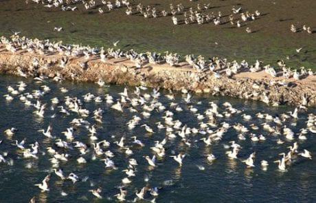הפורטל הישראלי לחקלאות טבע והסביבה – כתב תביעה תקדימי: מגדלי הדגים תובעים את המדינה ב-20 מליון ₪