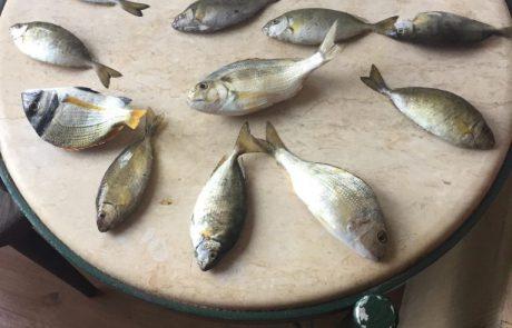 """בנימין: """"יצאתי לסוף שבוע למלון באילת עם 2 מקלות דייג ובין ההנאות במלון יצאתי לחוף הים ותפסי המון דגים עוד הנאה לכשלעצמה !!"""""""